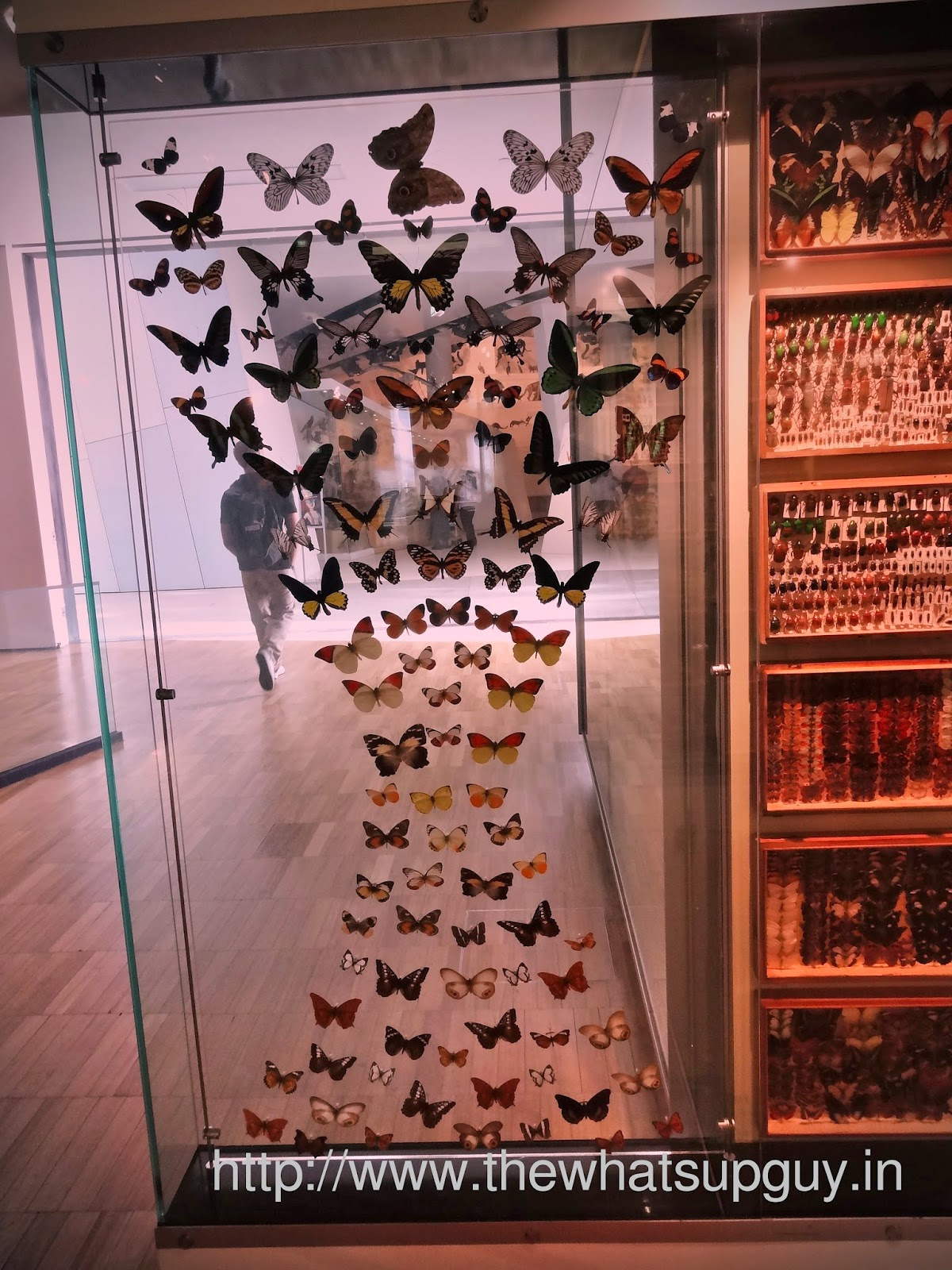 Melbourne Museum Butterfly Hourglass