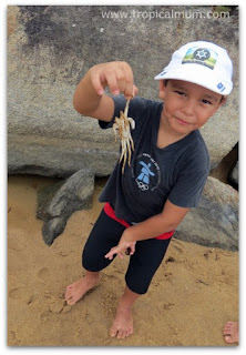 child picking up crab by its legs