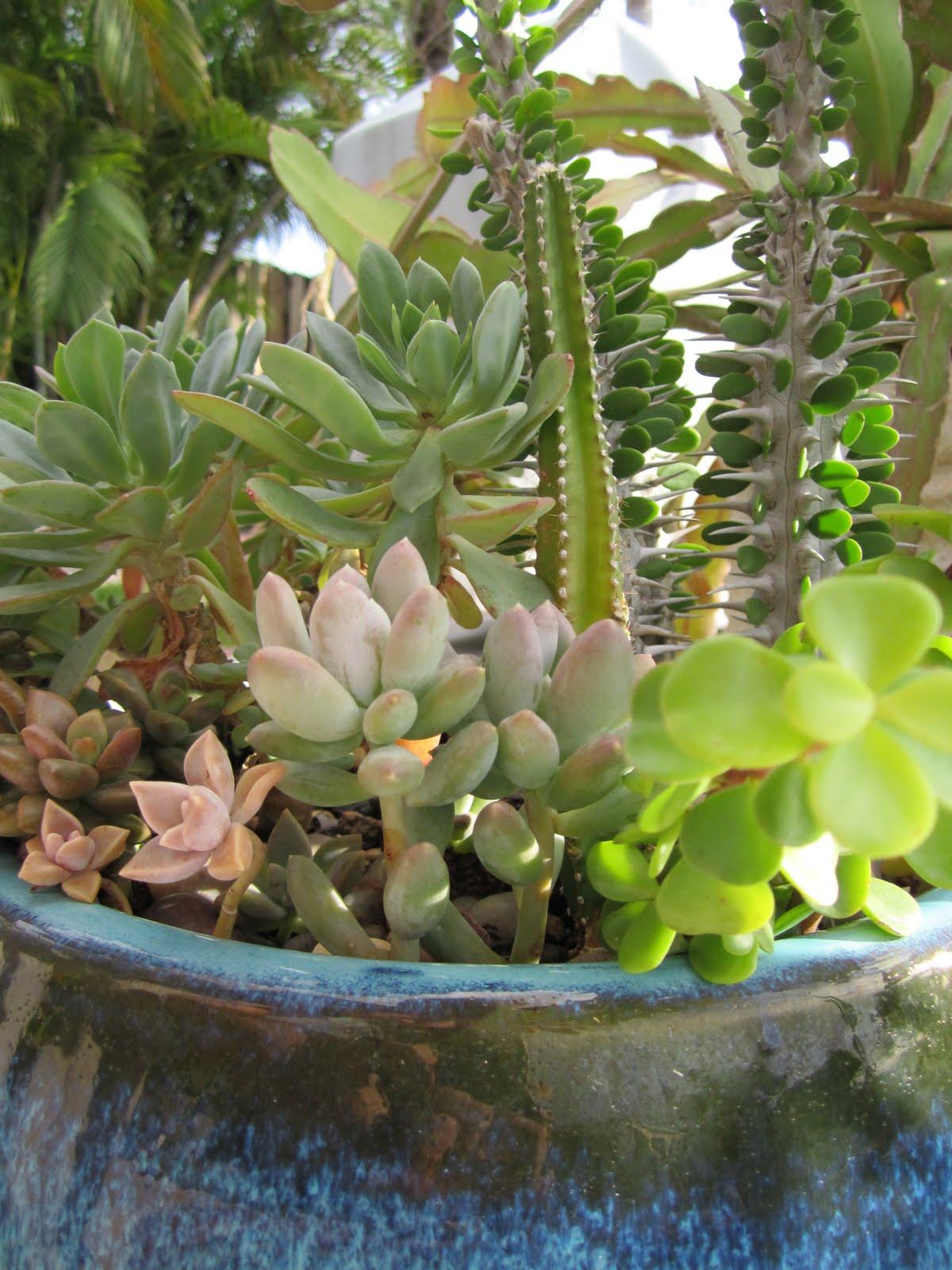 http://1.bp.blogspot.com/-urKLCILUSak/TeRNW4YoQ4I/AAAAAAAAJO4/HfAGSrN7mTo/s1600/Garden+Psuperography+by+Catherine+Michelena+of+Inspire+Bohemia+blog+-+IMG_1121.JPG