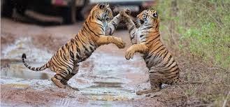 Wildlife Attractions Corbett India