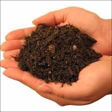 soils+in+hand.jpg