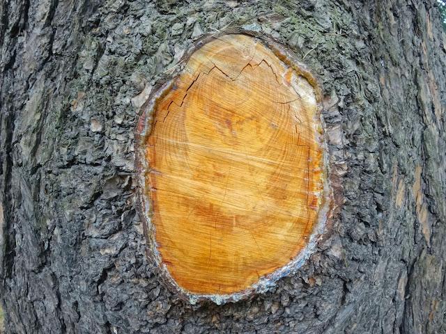 年輪,樹木,新宿御苑〈著作権フリー無料画像〉Free Stock Photos