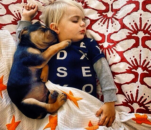 Theo & Beau, puppies sleeping with baby