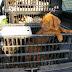 Λαθρεμπόριο σκύλων στη Γερμανία από την Ανατολική Ευρώπη - και την Ελλάδα!
