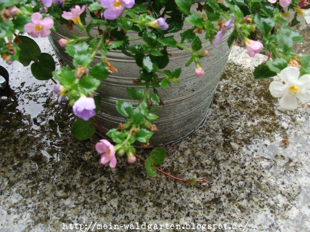 Mein waldgarten es giesst in str men for Fliegen in topfpflanzen