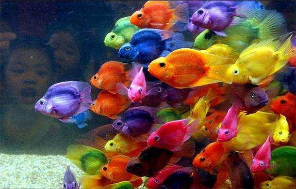 Imágenes Bonitas: Peces de multicolores