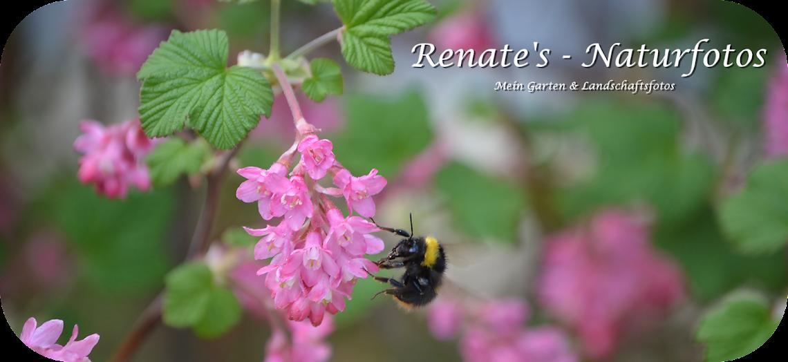 Renates-Naturfotos