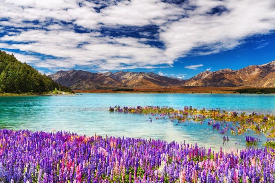 Beautiful Flowers Lake Mountains HD Nature Desktop Backgrounds Images Wallpapers