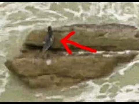 foto ikan duyung gambar hewan