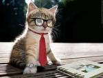 Kucing aja bisa jadi professsor.....