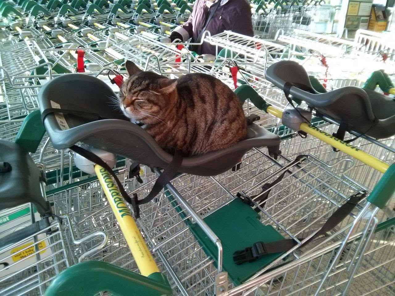 Funny cats - part 87 (40 pics + 10 gifs), cat sits on trolley