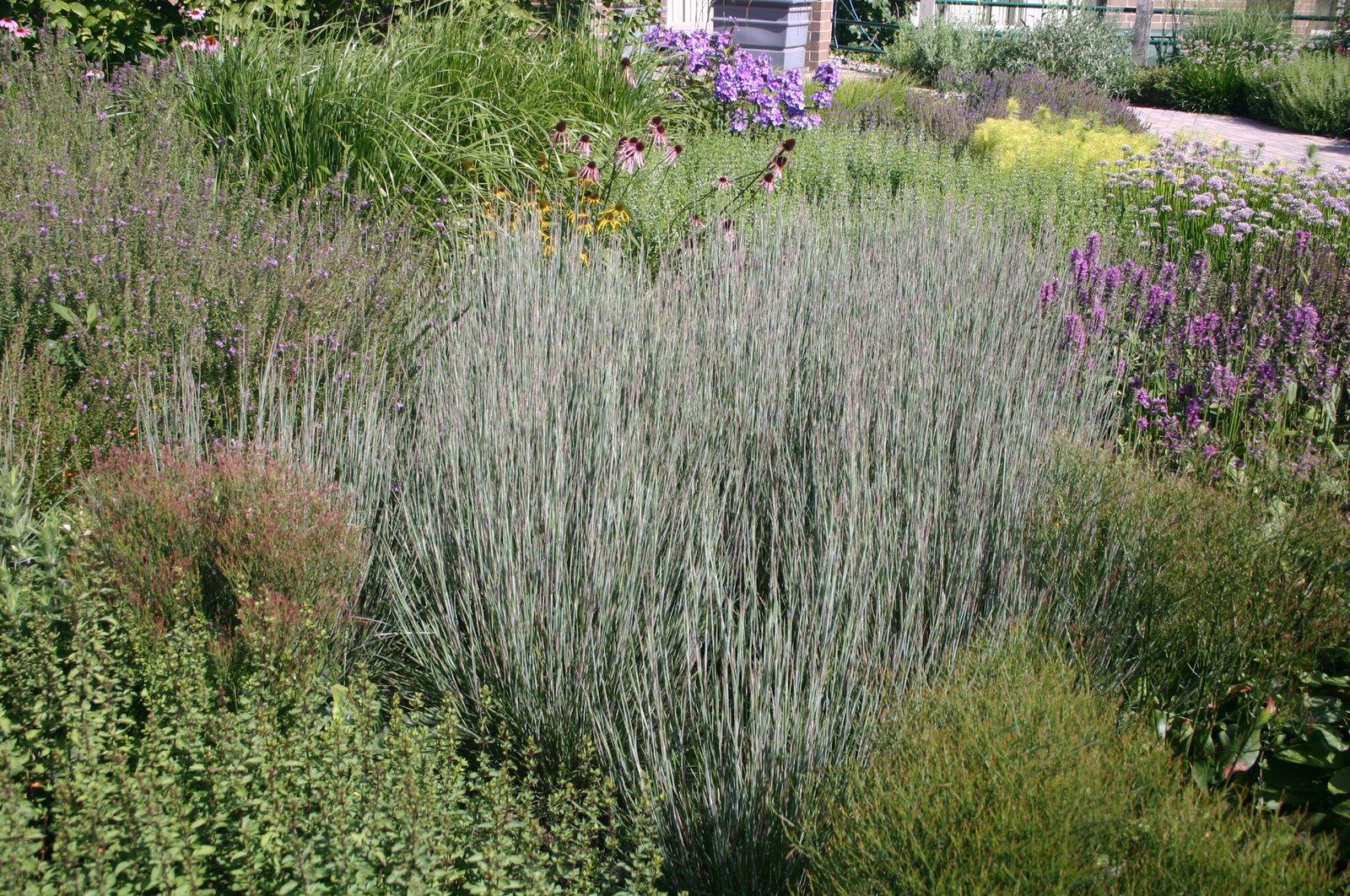 Gardener in a forest hot trend in residential landscapes for Short grasses for landscaping