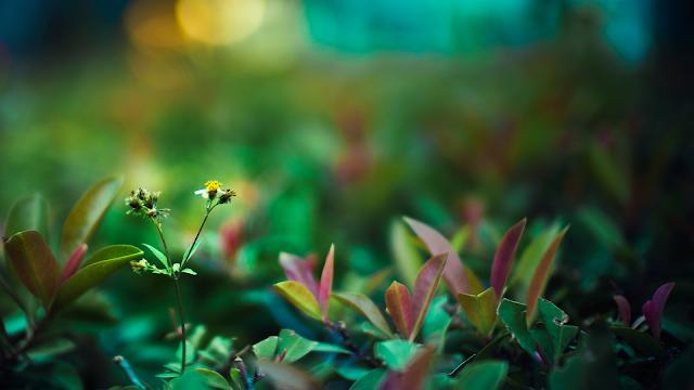 Hình nền khu vườn mùa xuân - ảnh 10