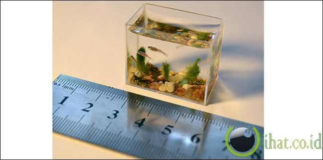 Aquarium terkecil di dunia