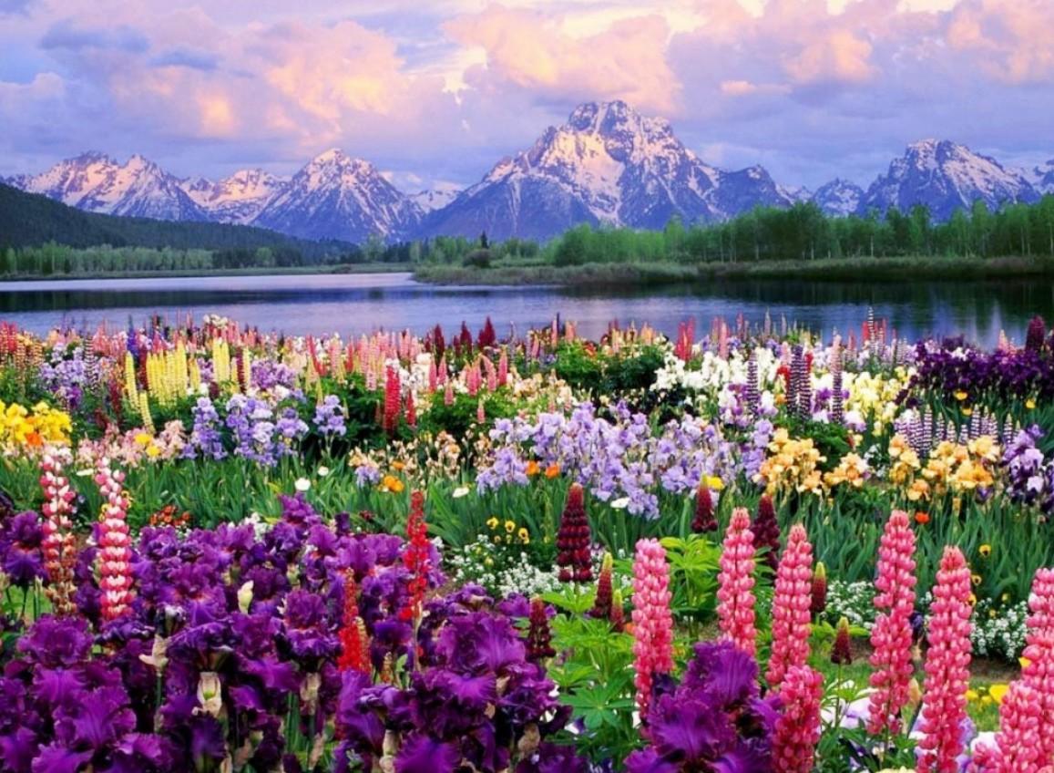 Cuadros modernos pinturas y dibujos paisajes floridos - Paisajes nevados para pintar ...