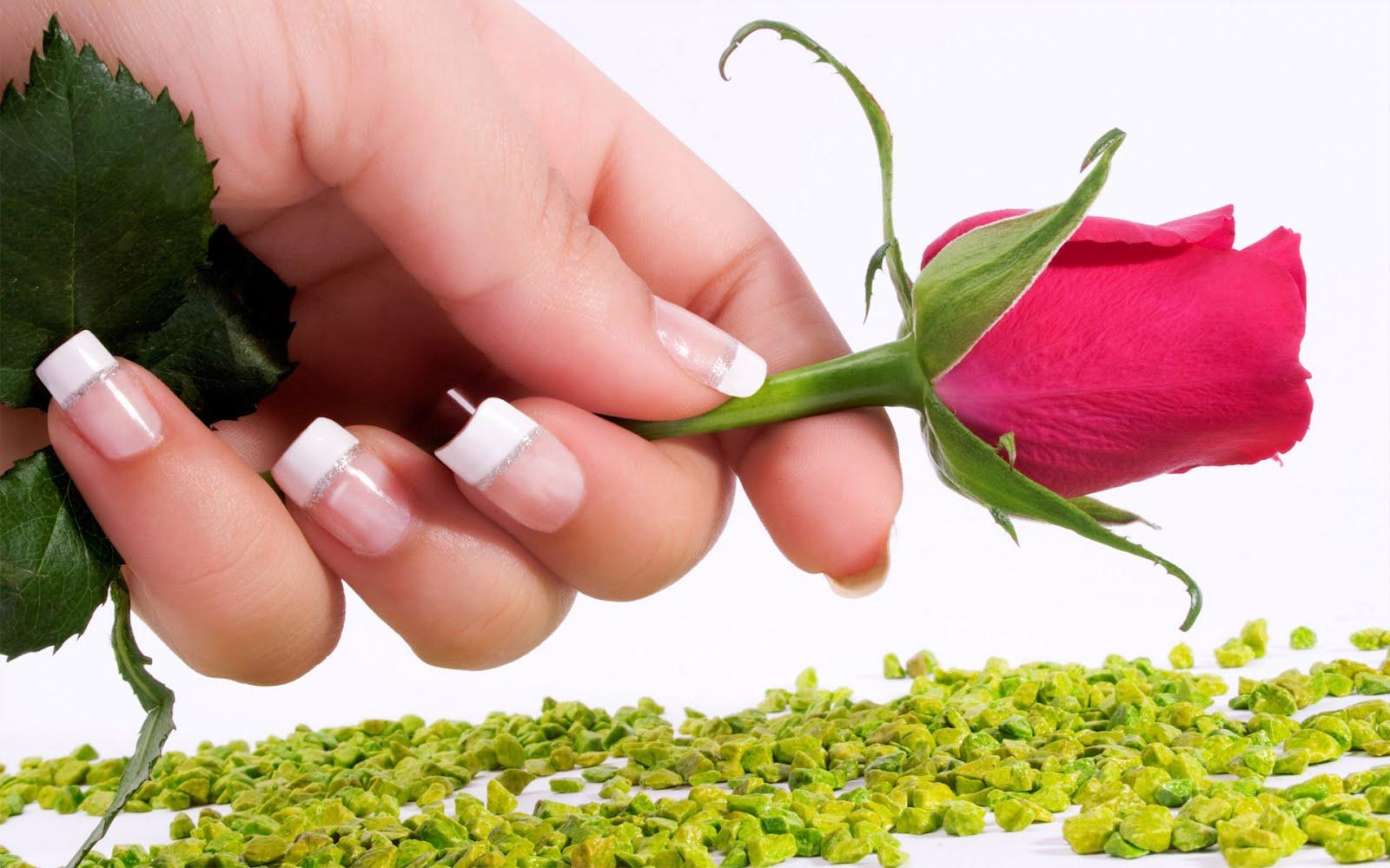 http://1.bp.blogspot.com/-uuVq__wuPao/TzBRcuzsRfI/AAAAAAAAH08/hKa_HKMlzjg/s1600/hq-red-rose-wallpaper.jpg