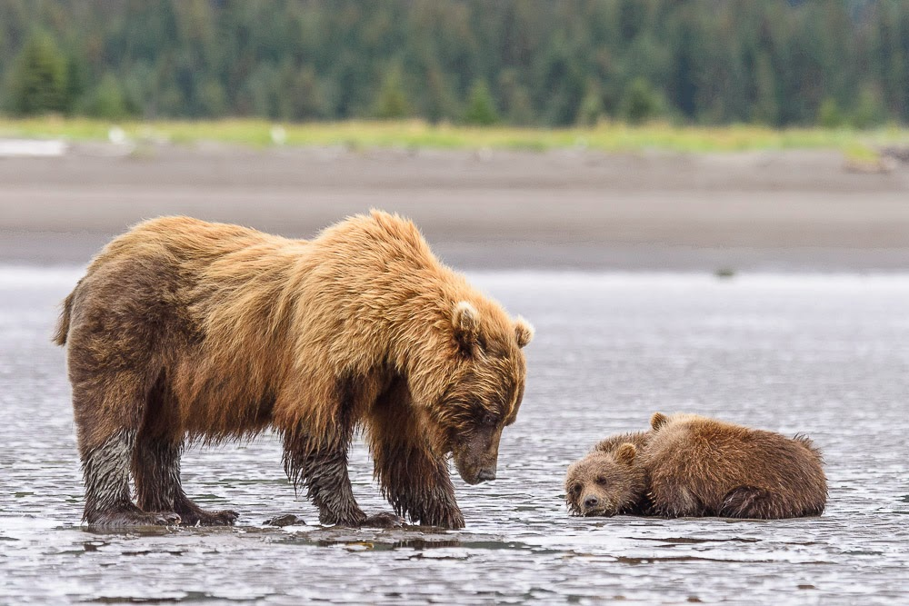 http://www.rudolf-hug.ch/content/fotogalerie/Travel/Alaska%202014%20Lake%20Clark/index.html
