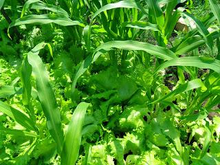 24 июня, салат можно использовать до конца июня
