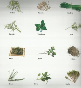 Bonavida099 plantas aromaticas en la cocina - Plantas en la cocina ...