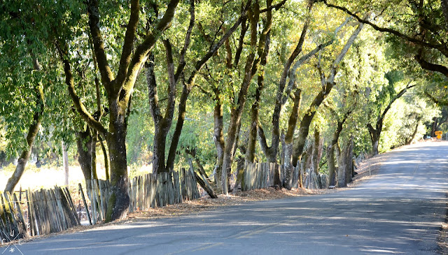 On the road - Russian River Valley, California, USA