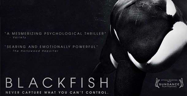 Blackfish Documentary - Awareness for Whales in captivity