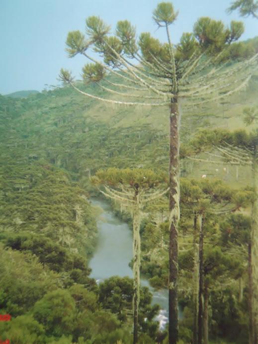 Região das nascentes do Rio Pelotas em Bom Jardim da Serra/SC
