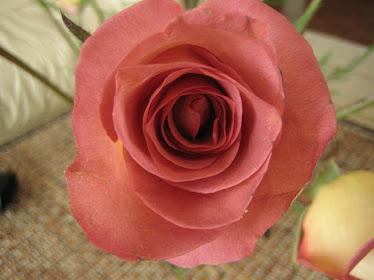 Una rosa es una rosa