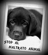STOP al maltrato animal, está en tus manos