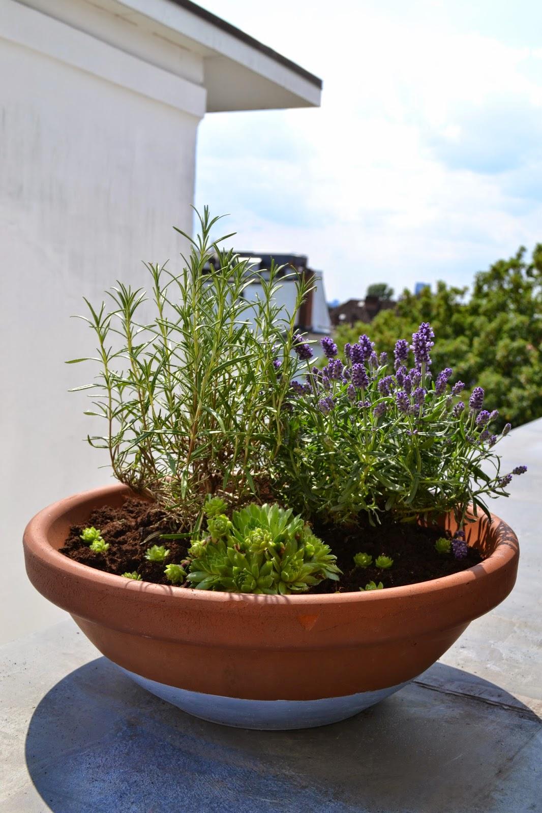 jurinde macht was diy pflanzschale mit lavendel rosmarin und sukkulente. Black Bedroom Furniture Sets. Home Design Ideas