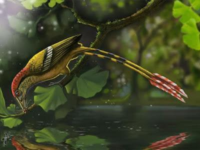 Pesquisadores descobrem no Ceará fóssil da ave mais antiga do Brasil