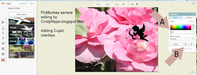 Digital Photo Editing Tips, PicMonkey tutorial, Pink Garden Roses, Valentine's Day, Bible Verse, Inspirational Art