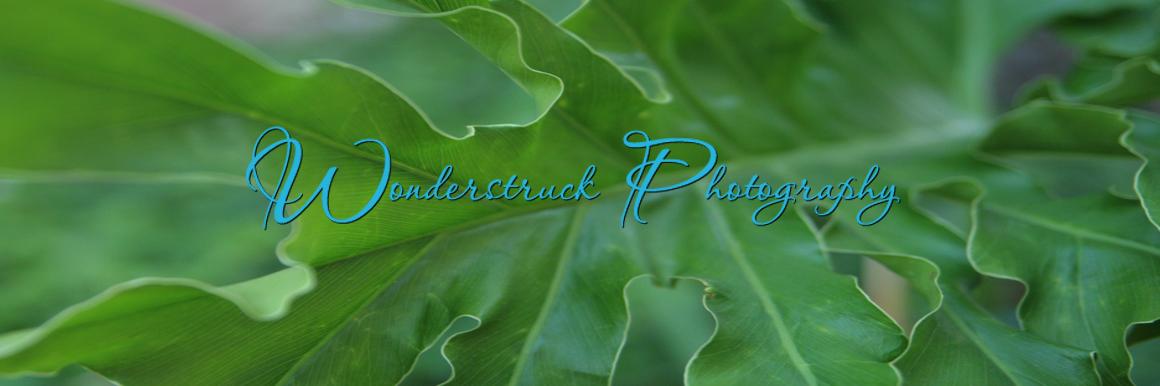 Wonderstruck Photography