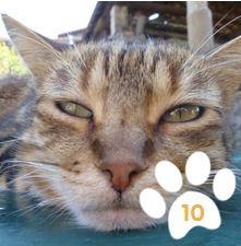 Cliquez sur la photo... et votez pour Totoro