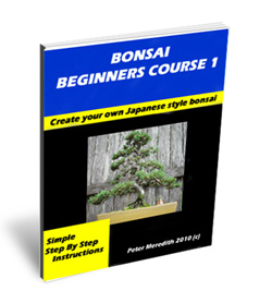 Bonsai Beginners Course 1