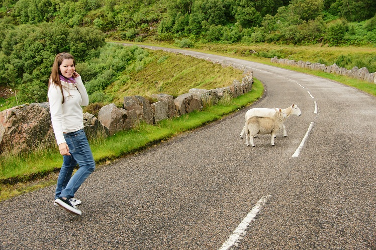 Sheep In The Scottish Highlands!