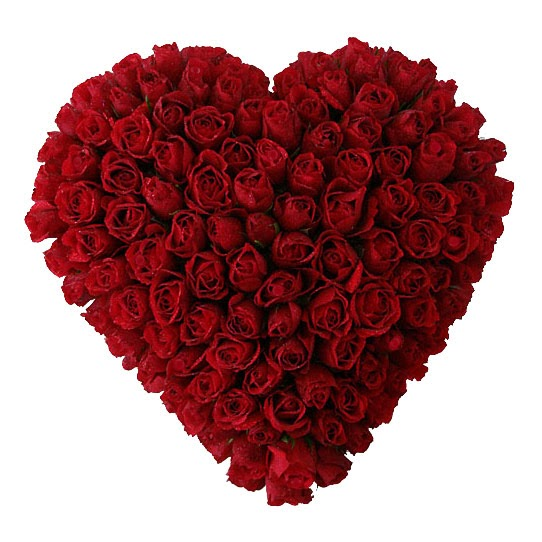 Big Red Roses for Big Love
