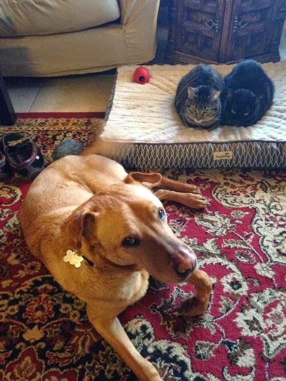 Смешные коты и кровать собаки