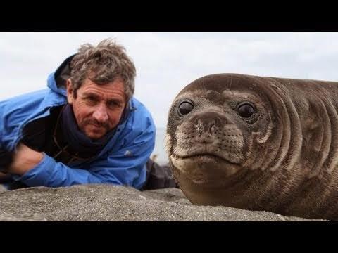 Homem deita ao lado de uma foca bebê, e acontece algo emocionante