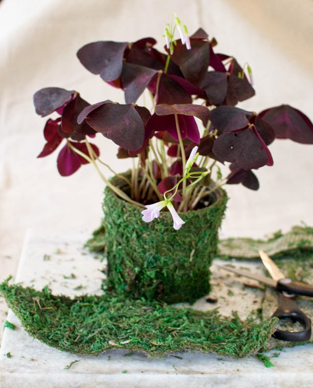 lining a plant with moss