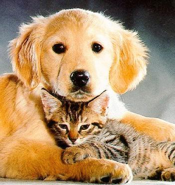 Catanddog2funnycatsanddogspics s351x372 49223 580