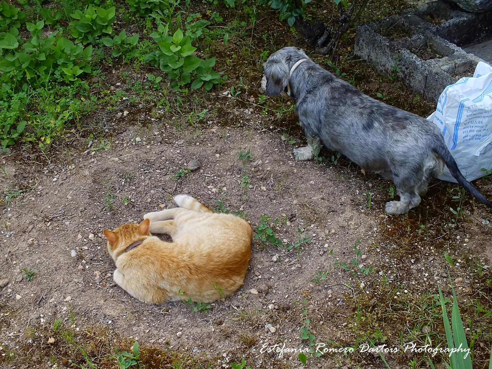 El fin del olvido disfrutando de mi jardin un regalo for Ahuyentar gatos de mi jardin