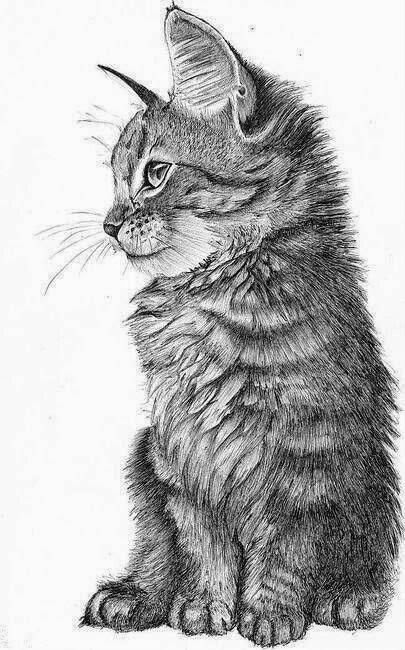 cat-drawing