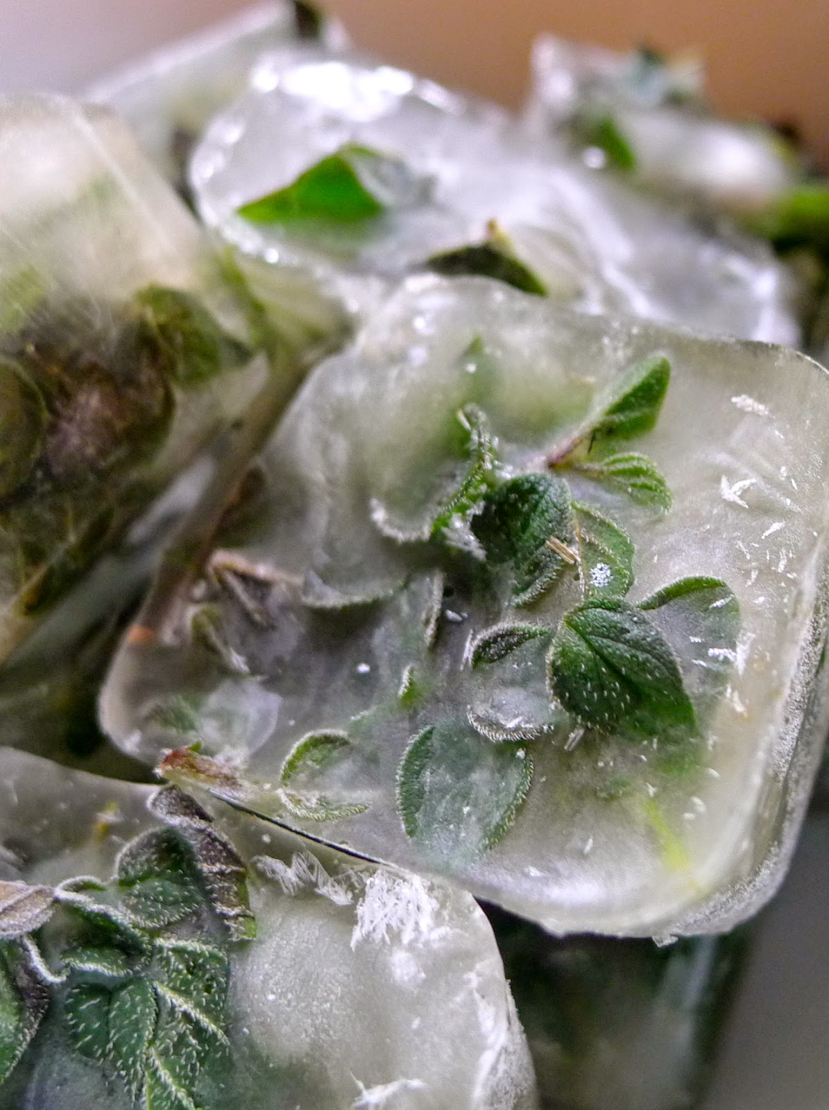 Frozen oregano, preserving herbs.