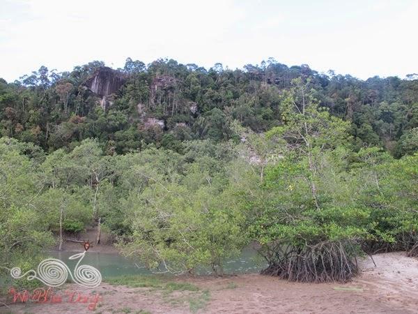 Bako National Park -Mangrove Forest - WireBliss