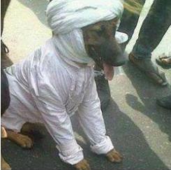 Gambar anjing pakai serban bukan dari Malaysia laaa