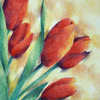 colored pencil drawing of five red tulips, copyright Rose Welty