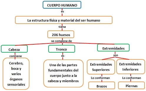 INFORMACION DIBUJO IMAGEN FOTO: ESQUEMA DEL CUERPO HUMANO