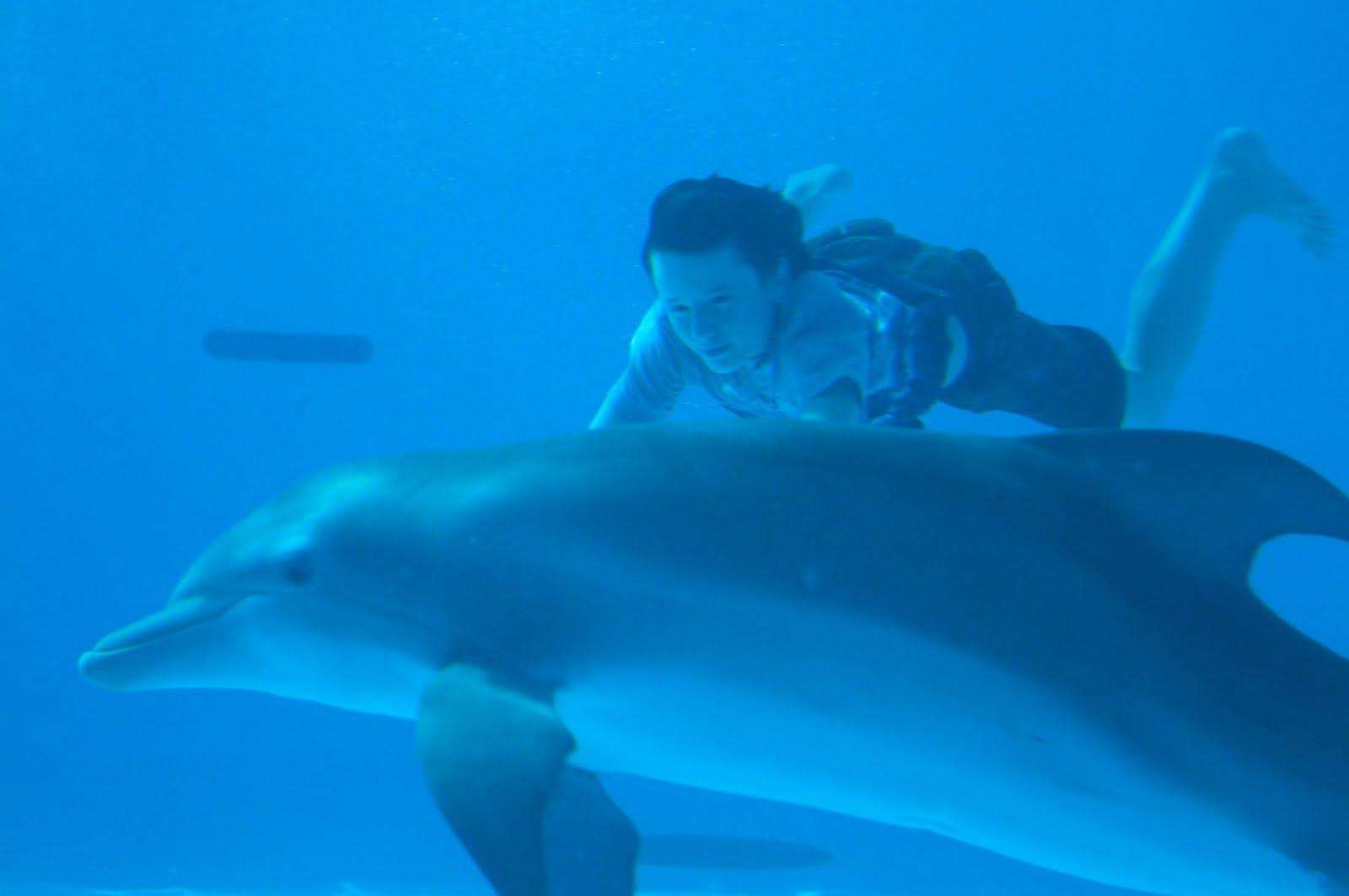 Dolphin's Tale Dolphin Tale | Teaser ...