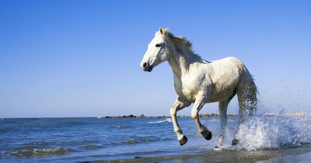 white horse running id - photo #20