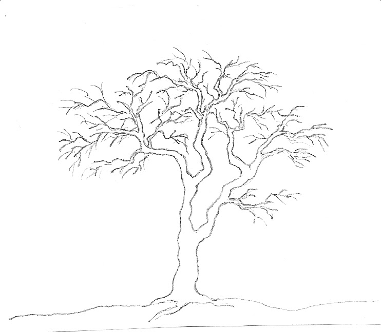 art by aunt marcy simple pencil drawing of a tree